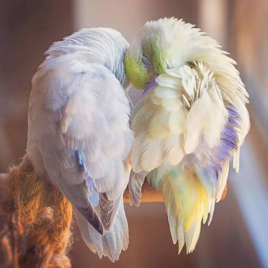 Je photographie l'histoire d'amour entre mes touis pastels, et le résultat fera fondre ton coeur
