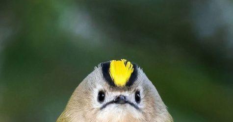 Ces nouveaux foulards dessinés à la main vous transformeront en oiseau