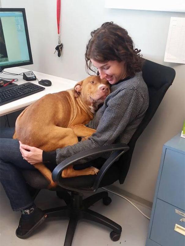 Des gens qui travaillent avec les animaux partagent leurs photos les plus mignonnes, et on ne peut plus s'en passer