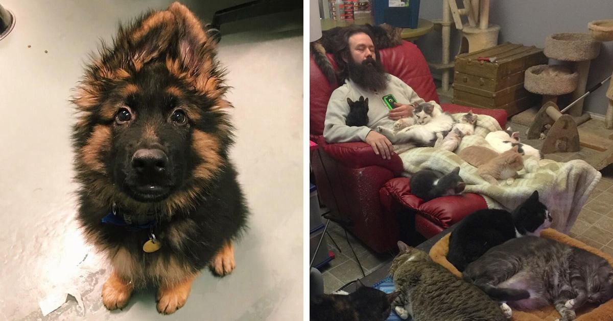 des gens qui travaillent avec les animaux partagent leurs photos les plus mignonnes et on ne. Black Bedroom Furniture Sets. Home Design Ideas