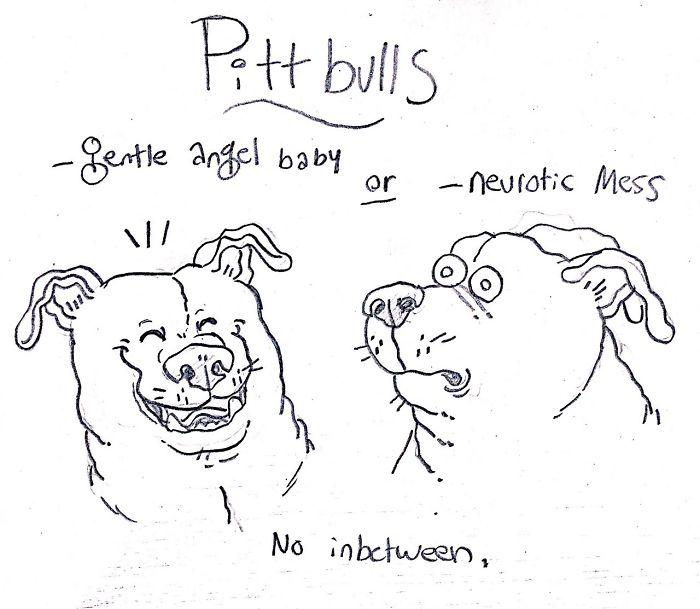 Ce guide hilarant sur les races de chiens vous aidera à choisir votre prochain chien