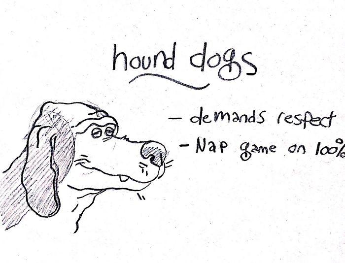 Ce guide hilarant sur les races de chiens va t'aider à choisir ton prochain toutou