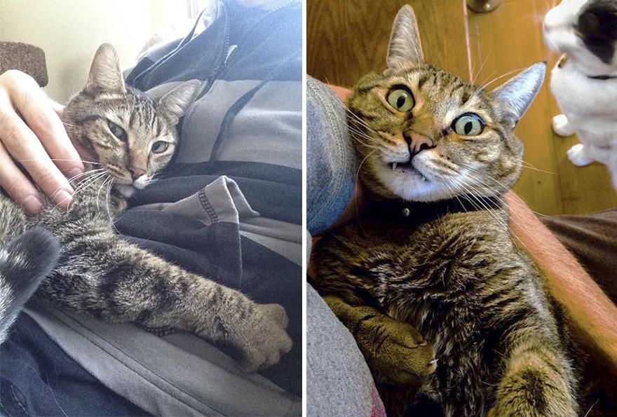 Un propriétaire de chat fait semblant de mourir pour voir comment son minou va réagir, mais il ne s'attend pas à cette réaction