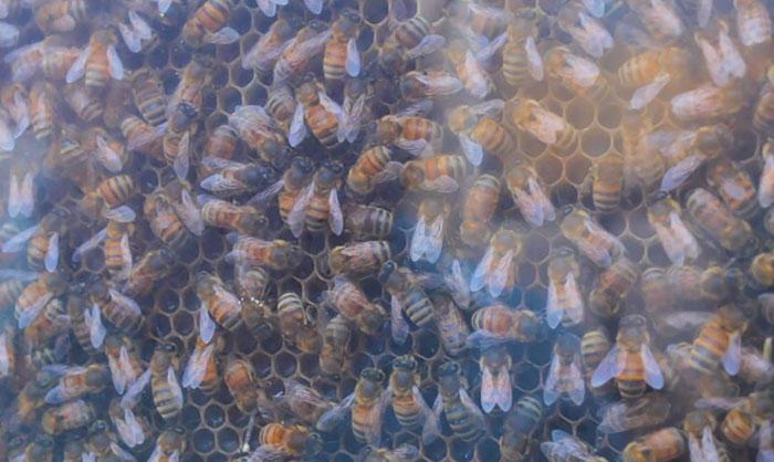 Cette entreprise géniale installe des ruches d'abeilles dans votre salon, et voici comment ça fonctionne