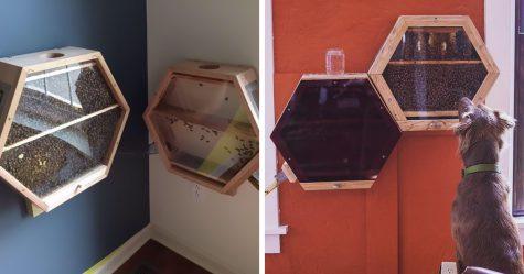 Fenêtre sur l'enfer: Il filme l'intérieur d'un volcan avec une GoPro