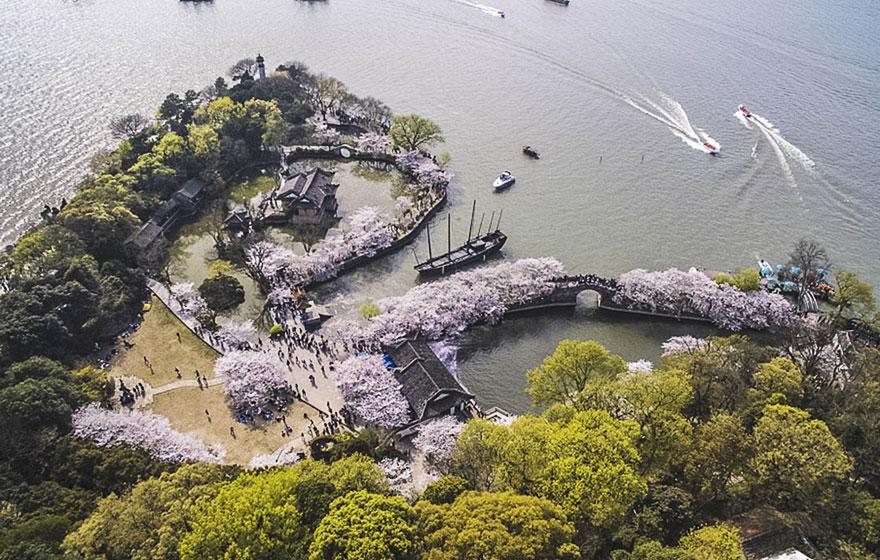 Les cerisiers viennent juste de fleurir en Chine et c'est probablement l'un des spectacles les plus incroyables de la planète