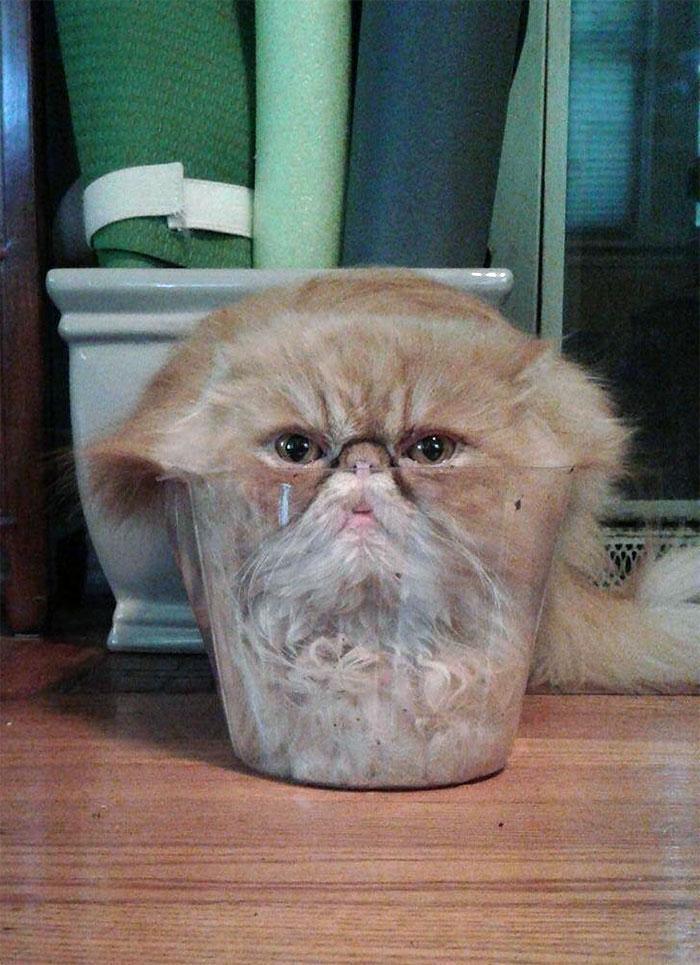 20 photos hilarantes de chats qui prouvent qu'ils sont des liquides