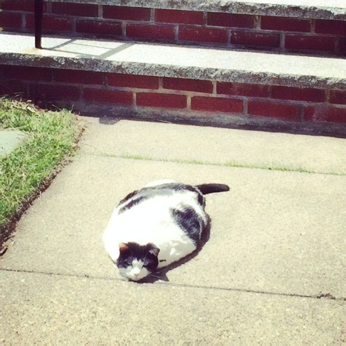 20 photos hilarantes qui prouvent que les chats sont des liquides