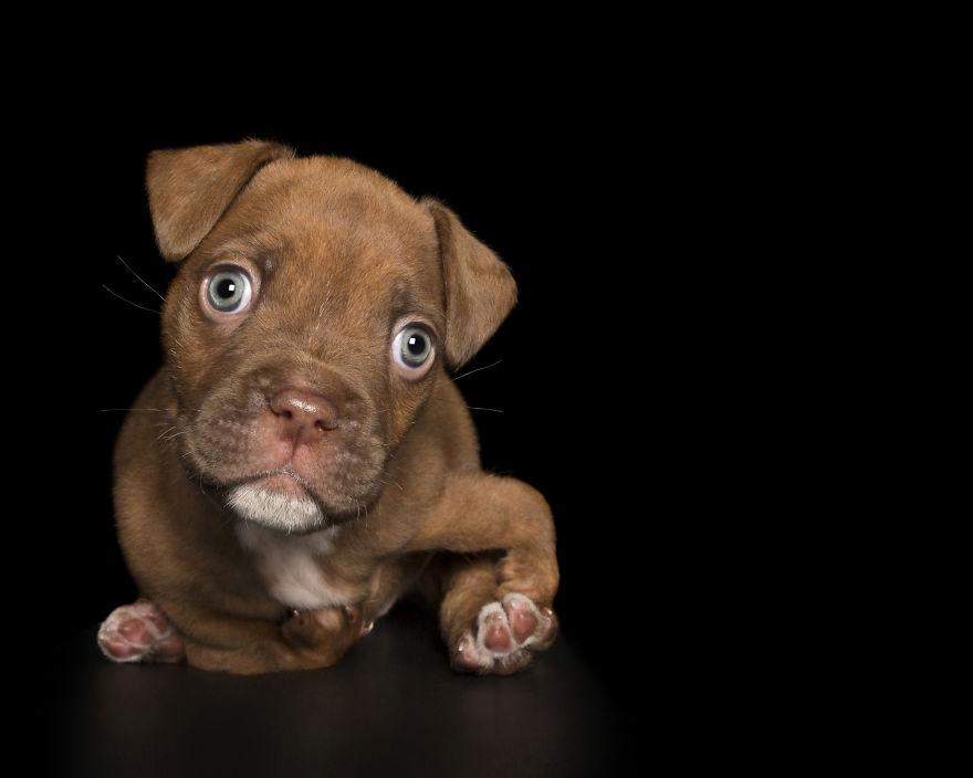 Un photographe prend des portraits de chiens qui sont parfaitement imparfaits
