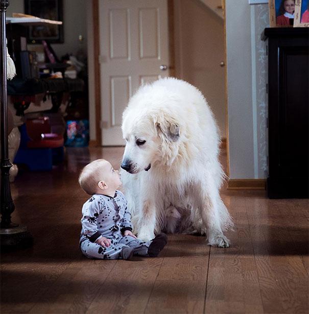 Si vous ne pensez pas que votre enfant a besoin d'un chien après avoir vu ces 20 photos, alors vous devez être un chat