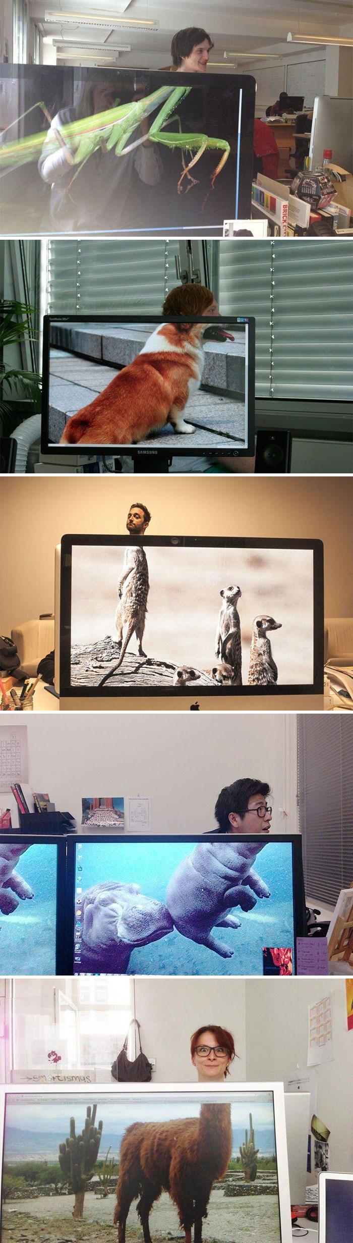 20 fonds d'écran brillants et hilarants qui vont te faire y regarder à deux fois