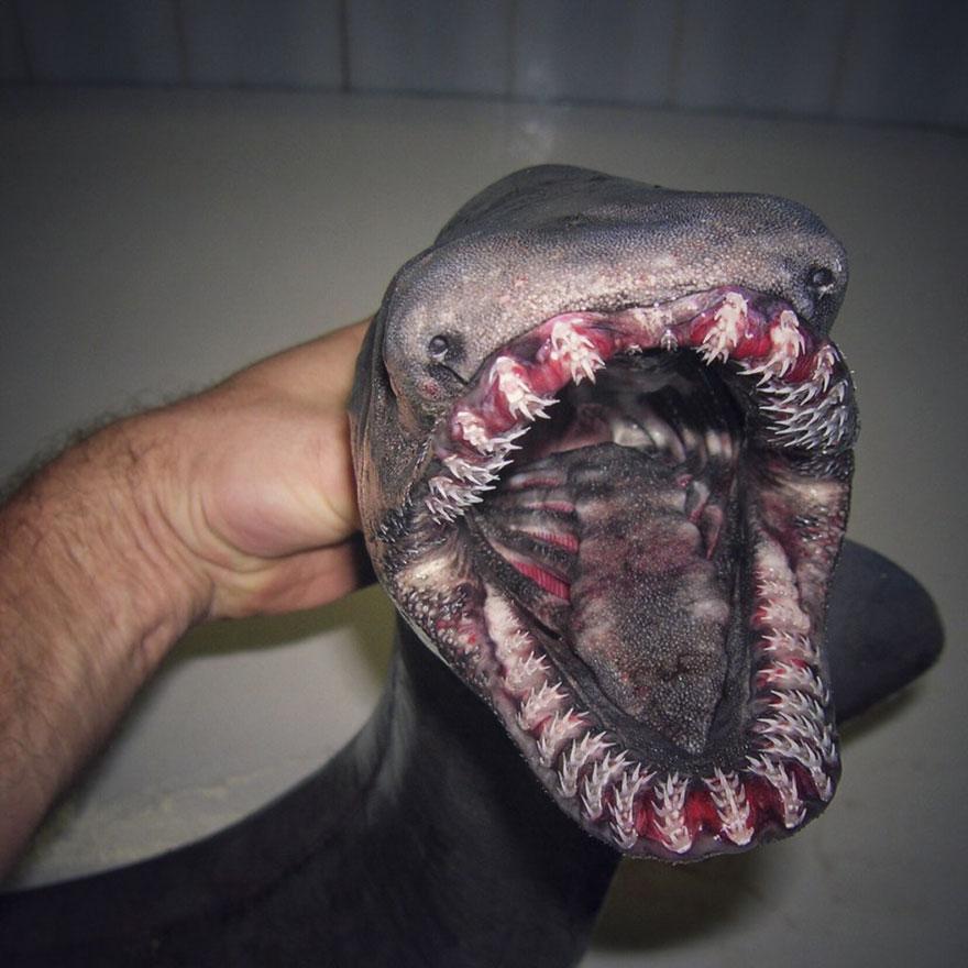 Cette illustration hallucinante montre à quel point l'océan est profond et elle va vous glacer le sang