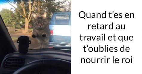 20 photos de chats avec des sous-titres hilarants