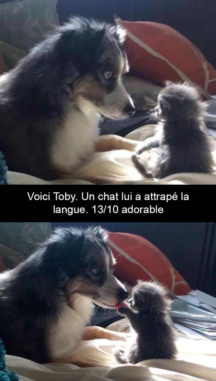 20 photos de chiens mignons avec des sous-titres hilarants qui ajouteront du soleil à votre journée (nouvelles images)