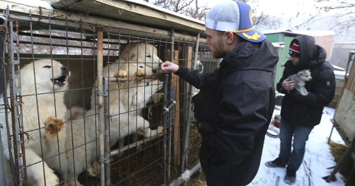 Le skieur olympique Gus Kenworthy a sauvé 90 chiens d'une usine à viande de chiens en Corée