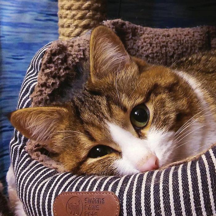 Ce chat a conquis le coeur des internautes grâce à ses expressions faciales hilarantes, et malgré son problème