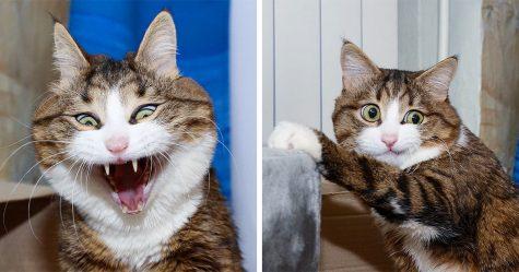 Des gens publient des photos de leurs chats qui s'étirent et c'est à mourir de rire (30 photos)