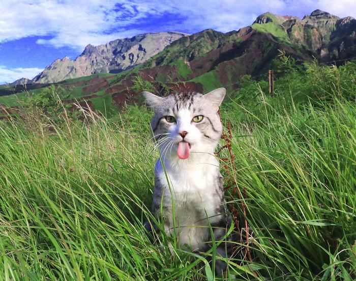 Ce chat est physiquement incapable d'avoir l'air moche dans ses photos