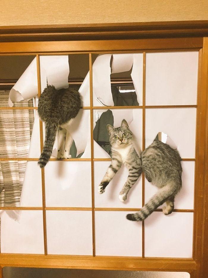 30 photos hilarantes qui prouvent que les chats sont les plus gros enfoirés