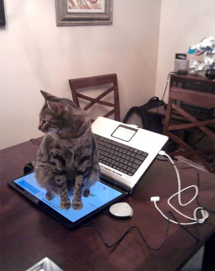 30 photos hilarantes qui prouvent que les chats sont de vrais petits démons