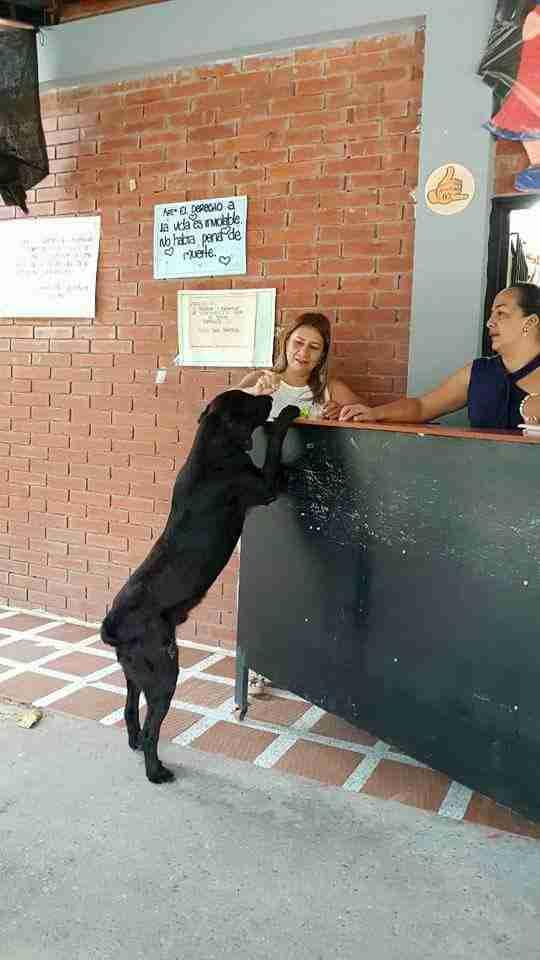 Ce chien apporte toujours une feuille pour «s'acheter» des friandises au magasin