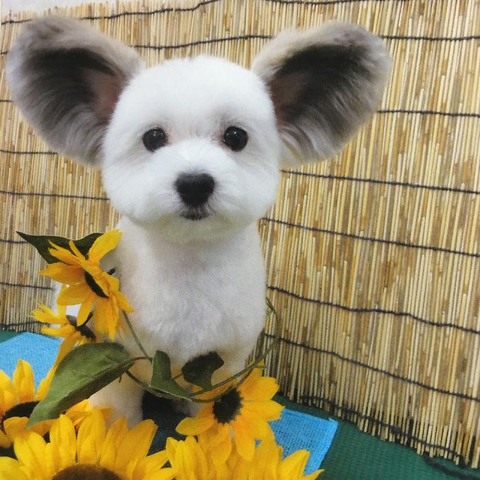 Les internautes sont obsédés par ce chien avec des oreilles de Mickey Mouse, et ses photos vont vous coller un sourire au visage