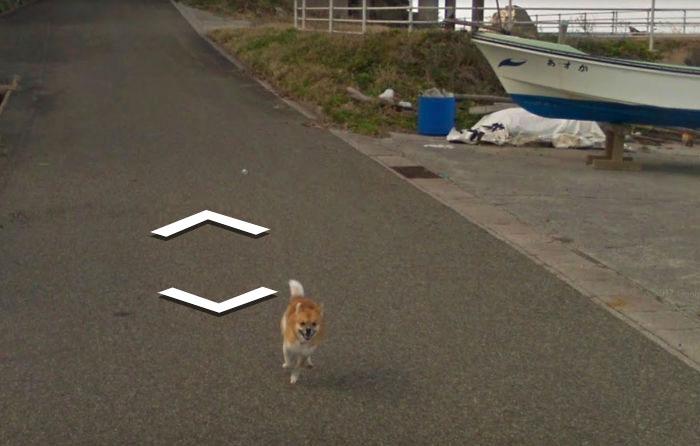 Un chien suit la voiture Google Street View et «ruine» chacune des photos de façon hilarante