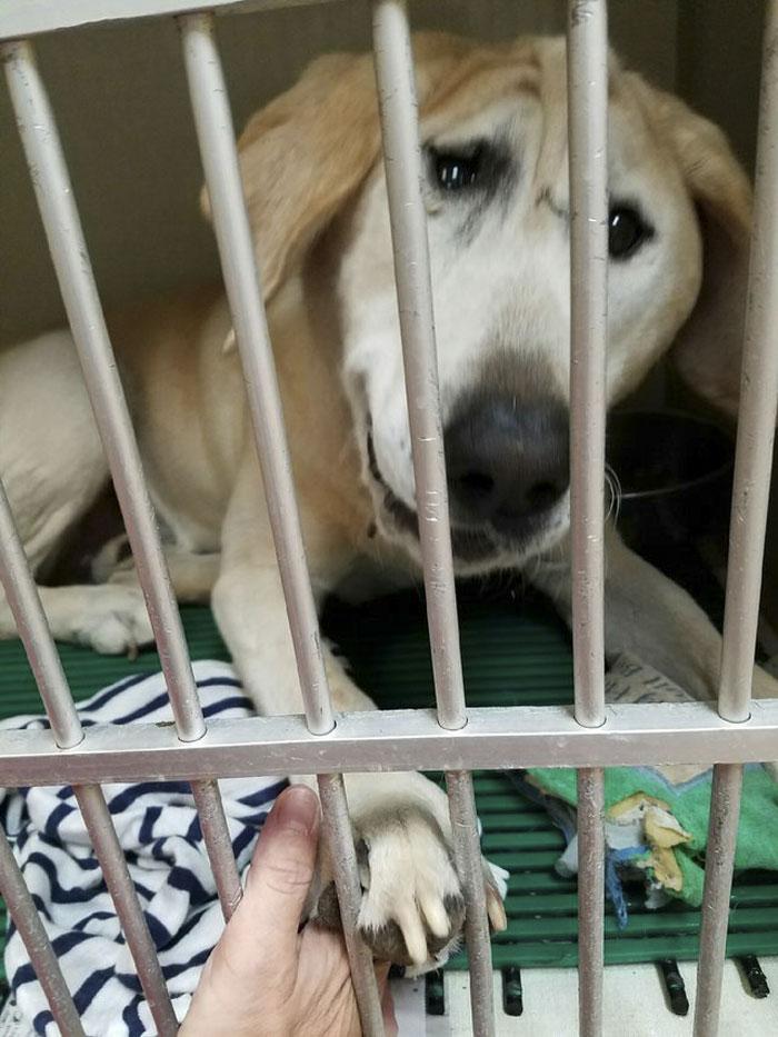 Ce chien abandonné à cause de son visage «laid» a été adopté, et sa transformation est incroyable