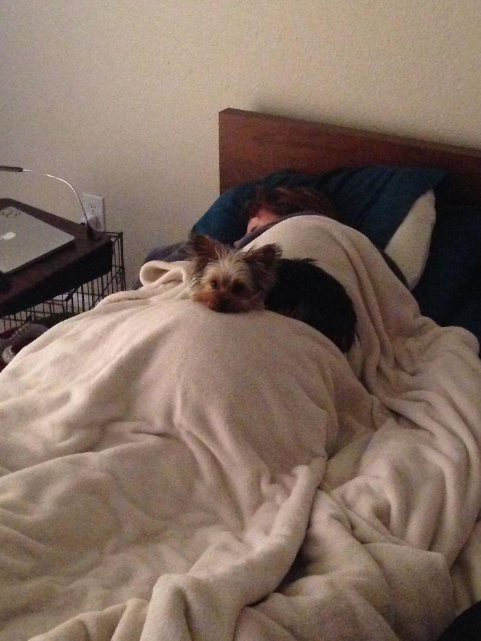 22 exemples d'amour inconditionnel de chiens qui vont faire fondre votre coeur