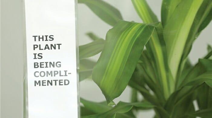 IKEA a demandé aux gens de harceler cette plante pendant 30 jours pour voir ce qui arriverait, et les résultats en disent long