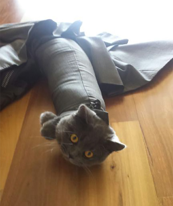 33 fois où des chats pas très malins ont fait des choses pas très malignes