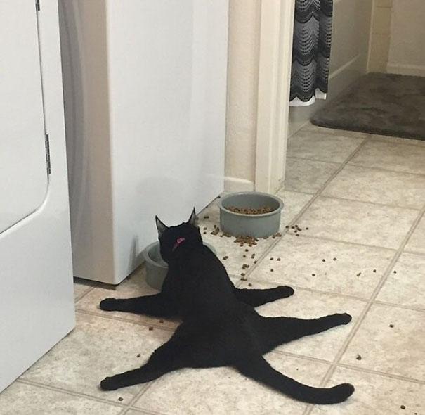 33 fois où des chats pas très malins ont fait des choses pas très malignes, et c'était juste trop drôle