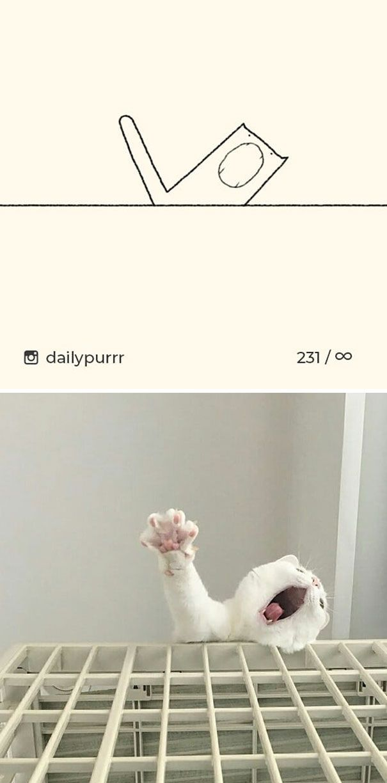 30 fois où des «dessins stupides de chats» ont fait rire tout le monde à cause de leur exactitude