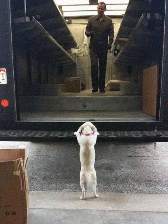 Des livreurs UPS partagent les meilleures photos prises sur leurs trajets, et on ne peut plus s'en passer