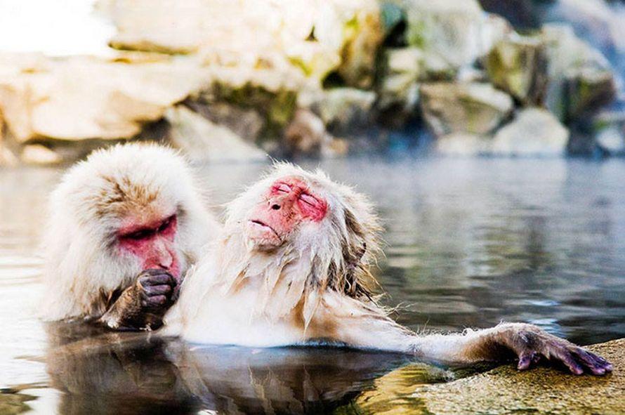 22 meilleures participations aux Prix de photographie humoristique de la faune 2018