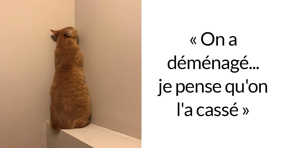 23 photos de chats avec des légendes hilarantes qui vont vous faire rigoler (nouvelles images)