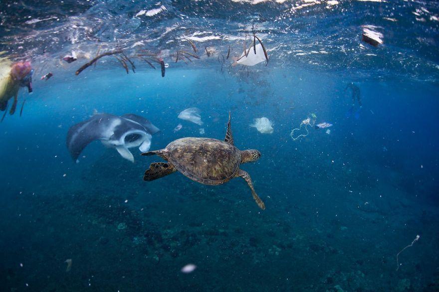 20 images percutantes sur la pollution plastique qui vont vous faire réfléchir