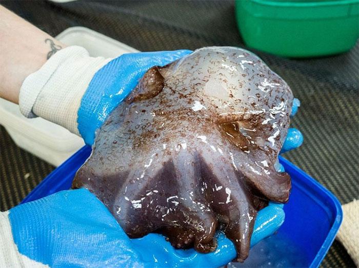 17 créatures terrifiantes trouvées par des chercheurs dans l'océan à près de 5000 mètres de profondeur