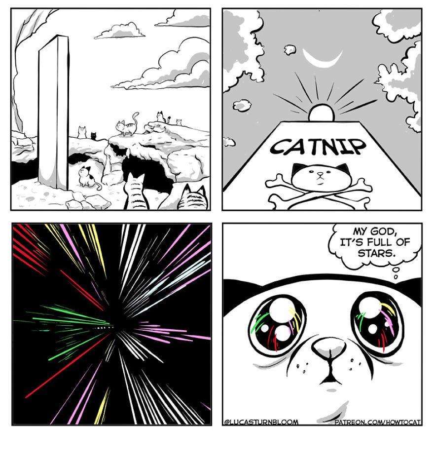 Ma femme a insisté pour que je publie ces bandes dessinées sur Internet – elles portent sur un chat qu'on a sauvé il y a quelques mois