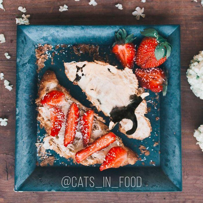 J'ai commencé à photoshoper des chats dans de la nourriture et j'ai réussi à obtenir 74000 abonnés sur Instagram