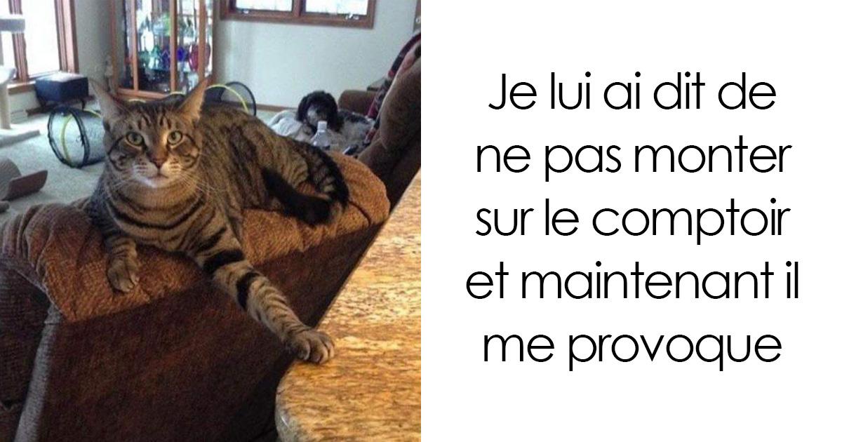 21 images hilarantes qui prouvent que les chats sont les plus gros enfoirés