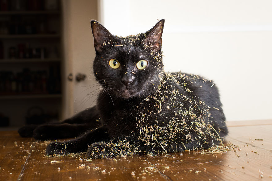 Je prends des photos de chats sous l'effet de l'herbe-aux-chats et c'est tellement amusant (19 images)
