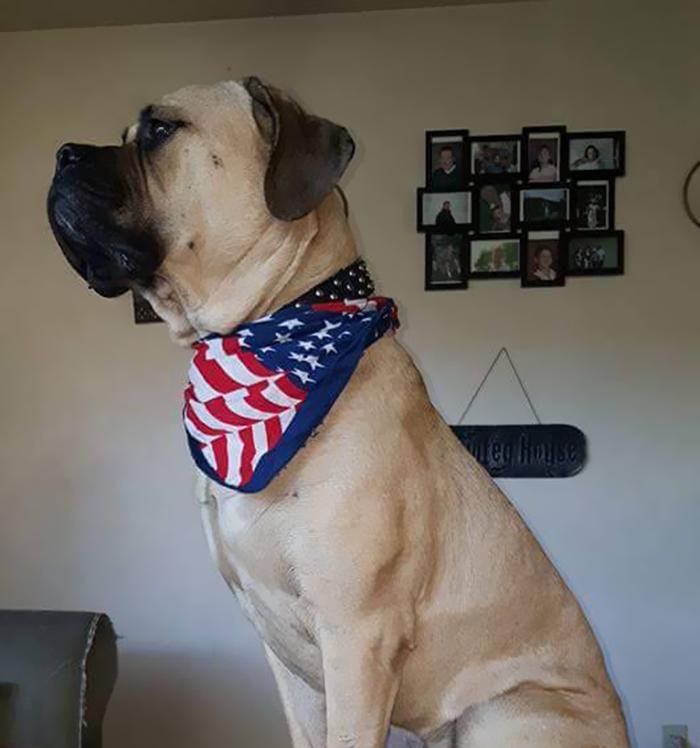 Voici ce que vous devriez faire si un chien d'assistance vous approche sans son propriétaire