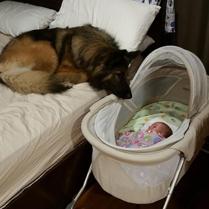 25 fois où des chiens ont montré leur amour inconditionnel à leurs humains
