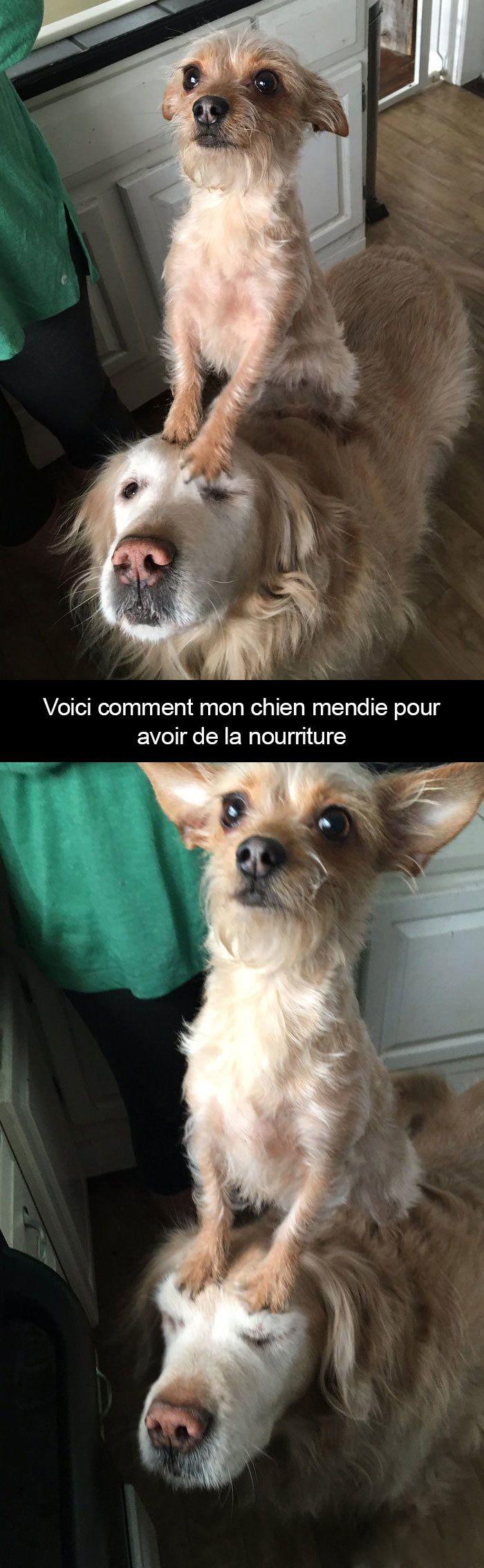 22 photos de chiens avec des légendes hilarantes qui vont vous faire rire (partie 5)