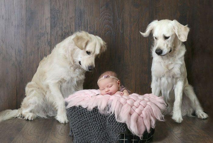 Des chiens aident un bébé à s'évader de sa chambre, et la séquence est juste trop drôle à voir
