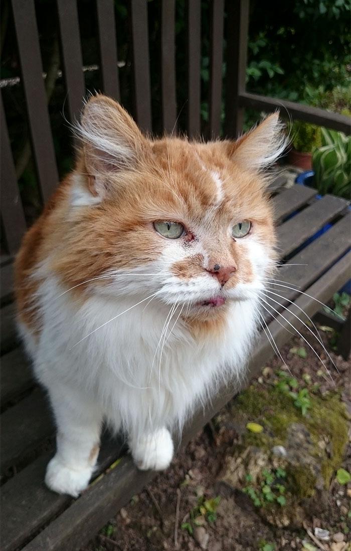 Une fille a eu un chat en 1988, mais elle ne s'attendait pas à lui organiser une fête d'anniversaire 30 ans plus tard