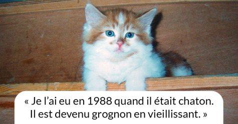 Le plus vieux chat au monde fête ses 31 ans