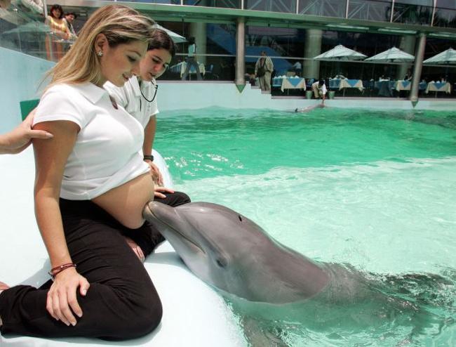 20 photos touchantes d'animaux qui attendent l'arrivée de bébés dans notre monde