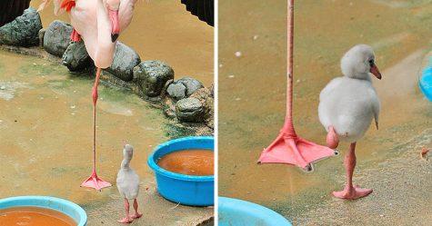 20 fois où des animaux ont fait des choses pour la première fois et ont eu les réactions les plus drôles